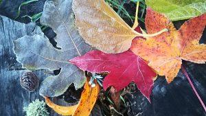tapis de feuille automne zen